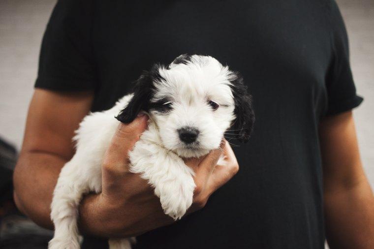 blog puppy.jpg